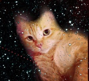 an extremely cute orange tabby cat lays on his stomach amid a field of stars
